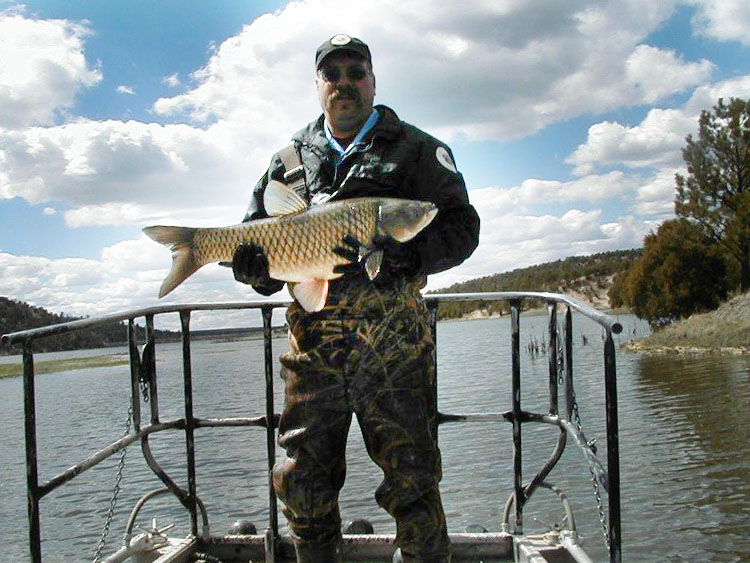 Fish Vendor Information for New Mexico - Department Game and Fish biologist holding a large grass carp from Quemado Lake