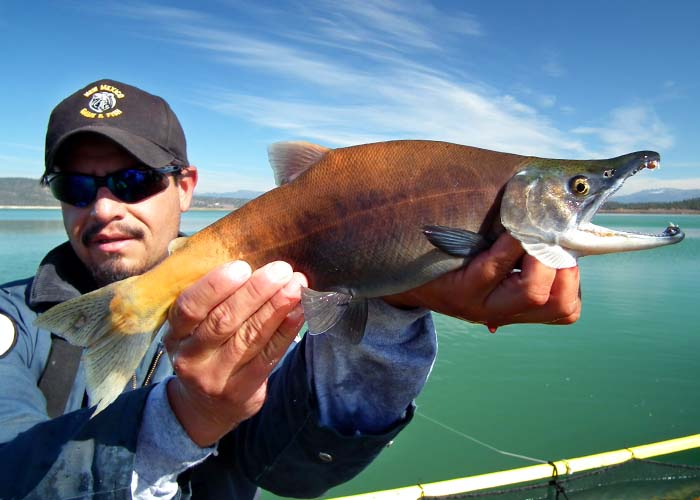 Fishing news new mexico department of game fish download pdf for New mexico fish and game