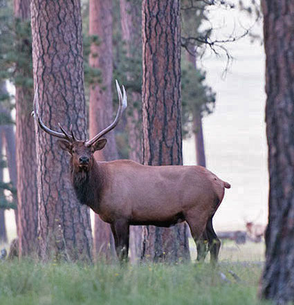 Hunters can use the landowner list to find private land elk authorization.