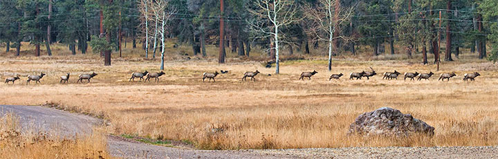 New Mexico land owners can qualify for private land elk authorization certificates.