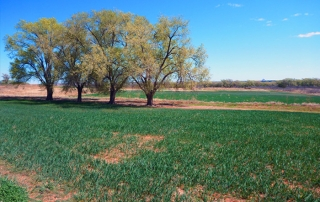 Open Gate Property 126 (Turkey Hunting) Tucumcari, New Mexico: Cropland, Grassland, and Woodland.