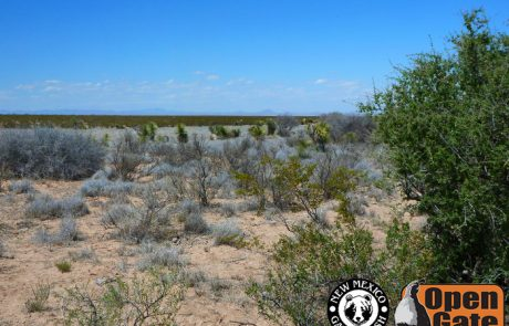 Open Gate Property 120 Hachita, New Mexico: scrub-woodlands with interspersed grassland provide dispersed hunting opportunities throughout the property for dove, quail, and javelina.