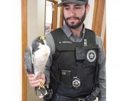 NMDGF Conservation Officer of the Month Matt Ordonez, June 2016