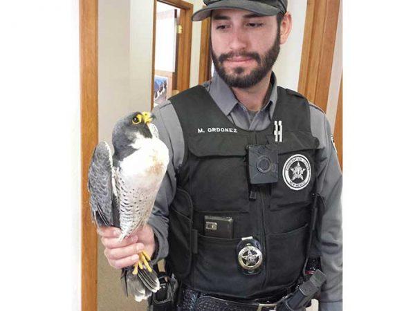 NMDGF Conservation Officer of the Month Matt Ordonez, June 2016