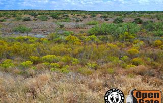 Open Gate Property 146 (Dove, Quail, Waterfowl, Sandhill crane, deer hunting, fishing) Roswell, New Mexico