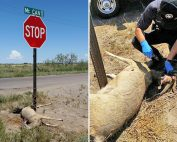 Enforcement OGT Operation Game Thief information reward for deer tied stop sign Deming, New Mexico