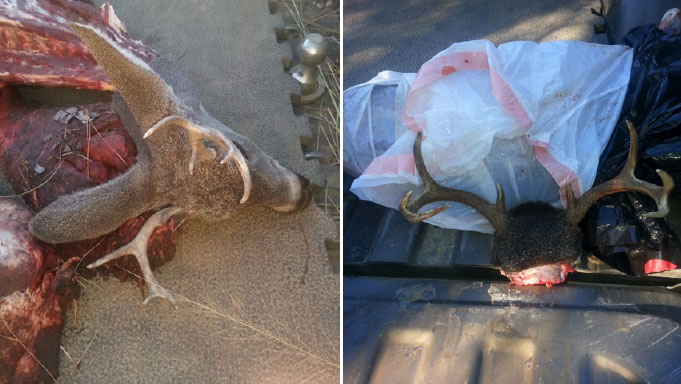 Case of Poached Coues Whitetail deer Solved, Catron County