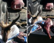 Case of antelope poached in Hidalgo County solved