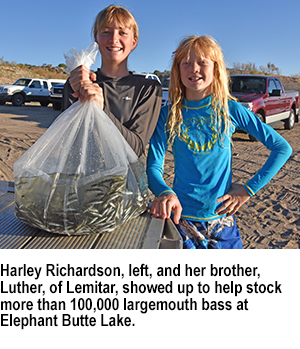 Bass fingerlings stocked at Elephant Butte and other lakes - New Mexico Game and Fish