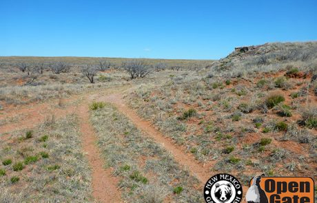 Open Gate Property 154 (hunting) Fort Sumner, Elida, New Mexico: Mid-grass Prairie, Mesquite Savanna, Draw, Drainages