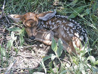 Public reminded to leave young wildlife alone - New Mexico Department of Game and Fish