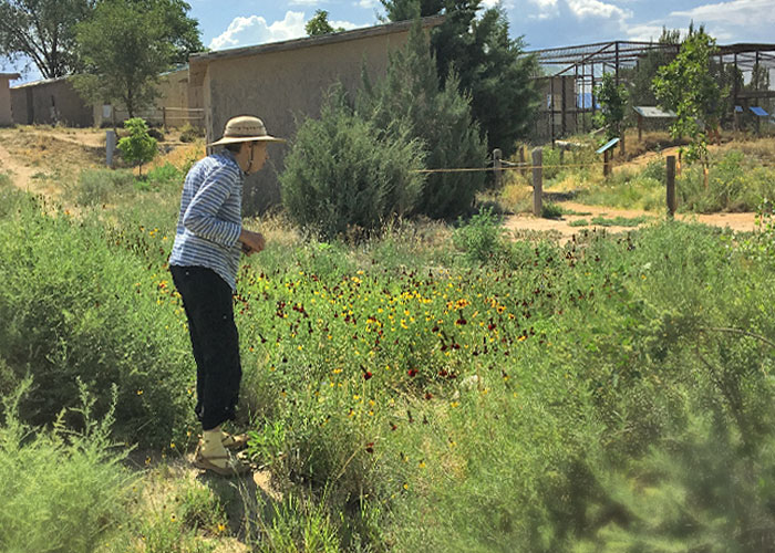 Share with Wildlife, New Mexico – Project Highlight: Pollinators and Other Wildlife