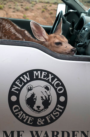 Public reminded to leave young wildlife alone. New Mexico Department of Game and Fish.