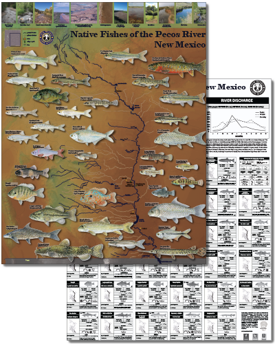 Native fishes of the Pecos River, New Mexico (click for New Mexico Department of Game and Fish PDF poster).