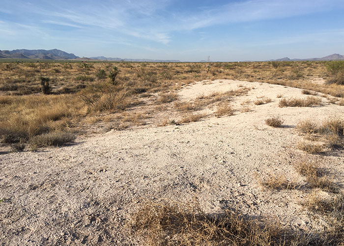 Share with Wildlife, New Mexico – Project Highlight: Finding a Needle in a Haystack