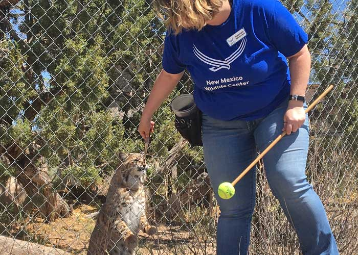 Share with Wildlife, New Mexico – Project Highlight: Wildlife Education and Rehabilitation
