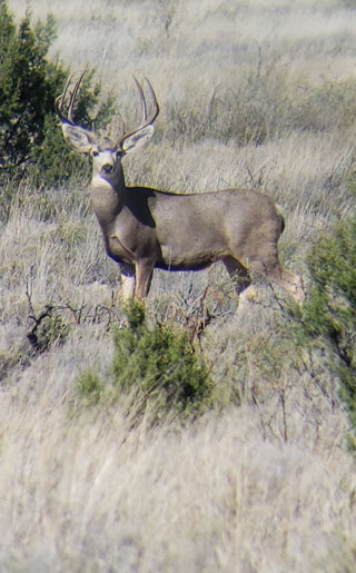 From the Alpine areas of the Sangre de Cristo Mountain Range to the desert floors in southwestern New Mexico, hunters can experience a variety of habitats.