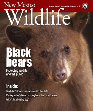 New Mexico Wildlife - Spring 2019 - News Magazine from NMDGF Game and Fish
