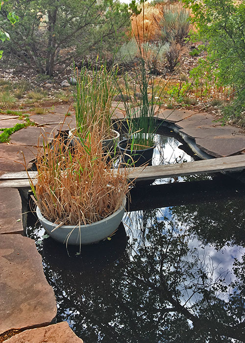 Can Restoration Work Spread Disease?- Project Highlight- Share with Wildlife, New Mexico Department of Game and Fish