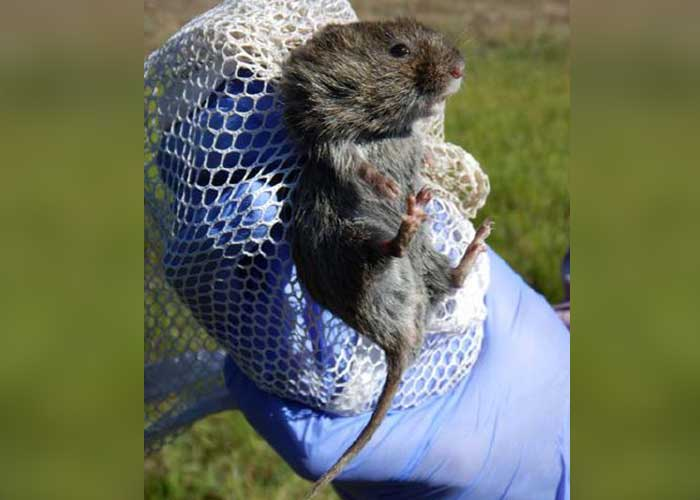 Voles in Trouble? - Share with Wildlife – Project Highlight - NMDGF