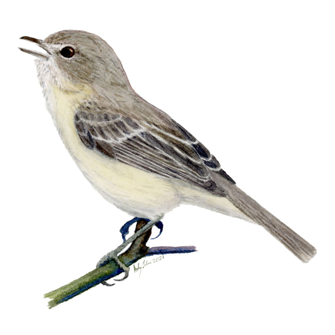 The Tale of (Potentially) Two Species of Bell's Vireos - Share with Wildlife – Project Highlight - NMDGF